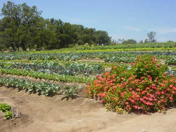 bell gardens 2003