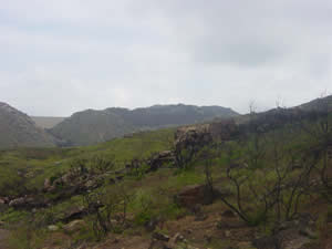 burned hills recovering from witch fire