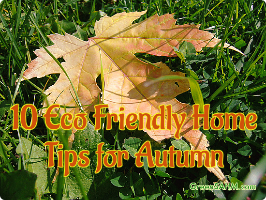 10 Eco Friendly Home Tips for Autumn
