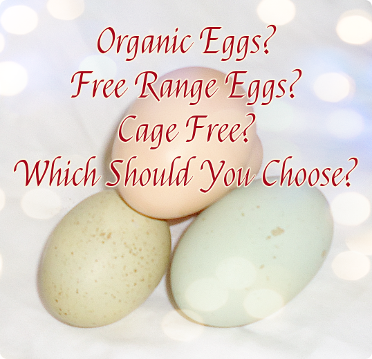 Organic Eggs? Free Range Eggs? Cage Free? Which Should You Choose?