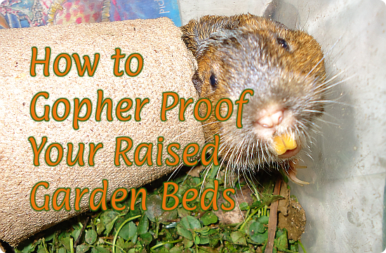 How to Gopher Proof Your Raised Garden Beds