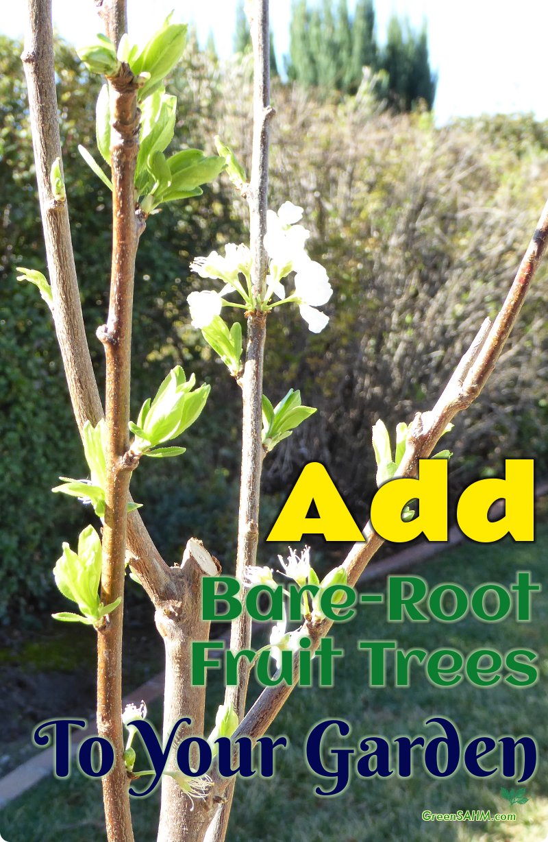 Add Bare-Root Fruit Trees To Your Garden